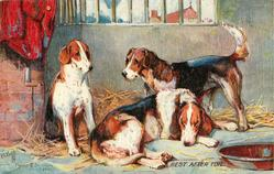 FOXHOUNDS  REST AFTER TOIL
