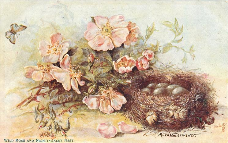 WILD ROSE AND NIGHTINGALE'S NEST