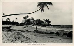 distant view of  hotel from beach, single palm upper left