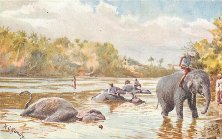 ELEPHANTS BATHING AT KANDY