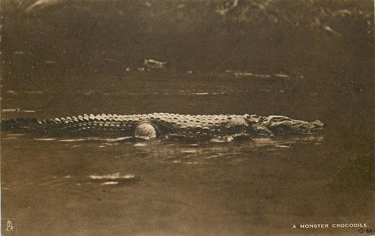 A MONSTER CROCODILE
