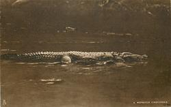 A MONSTER CROCODILE