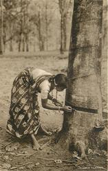 RUBBER TAPPING  girl left bending, tree right