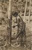 RUBBER TAPPING  tree left, girl right standing