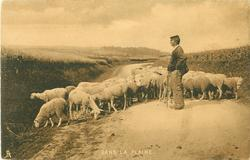 DANS LA PLAINE  shepherd with flock of sheep on road through flat countryside