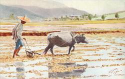 CHINAMAN PLOUGHING A PADDY FIELD ON THE MAINLAND NEAR HONG KONG