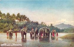 ELEPHANTS IN THE MAHAVILLA GANGA
