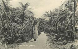 DATE PALMS, BASRA