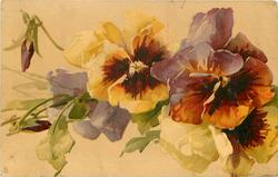 pansies, one yellow and rust, one yellow, one rust and purple, violet flowers & two buds left