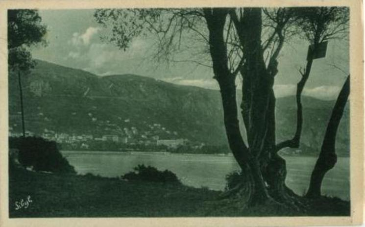 OLIVE TREES OF CAPE FERRAT