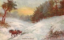 CLOTHED IN WHITE  horses in snow
