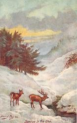 SUNRISE IN THE GLEN  deer, snow scene