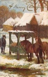 A MERRY CHRISTMAS  three horses, one eats from manger in snow