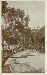 QUEEN'S ROAD, SHOWING PALMS