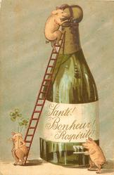 SANTE ! BONHEUR ! PROSPERITE ! (on bottle)  small pig uses ladder to climb enormous chapagne bottle, another with 4 leaf clovers over shoulder sits on base of ladder