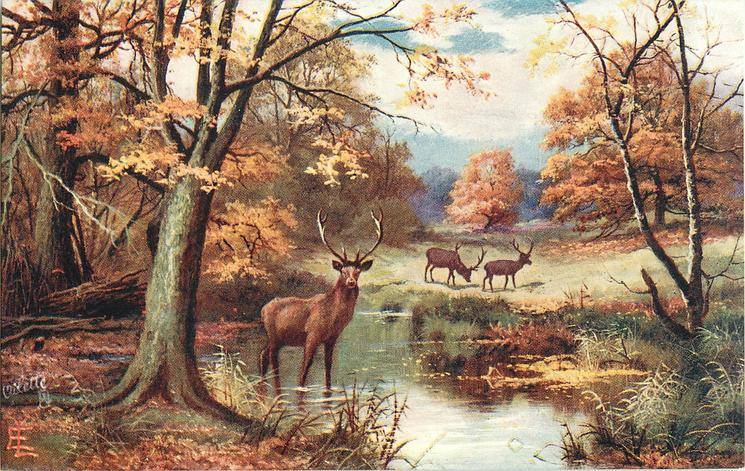 three deer, one in pond, two in meadow