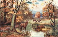 three deer, one in pond, two in meadow