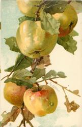 POMMES 5 apples