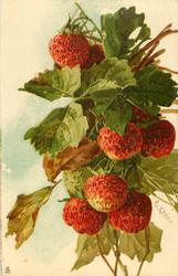 FRAISES strawberries