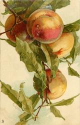 PECHES 4 peaches