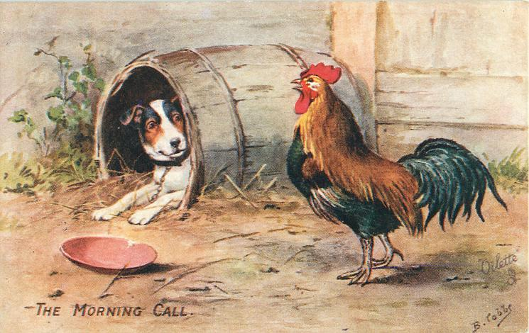 THE MORNING CALL  dog and rooster