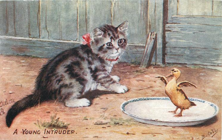 A YOUNG INTRUDER