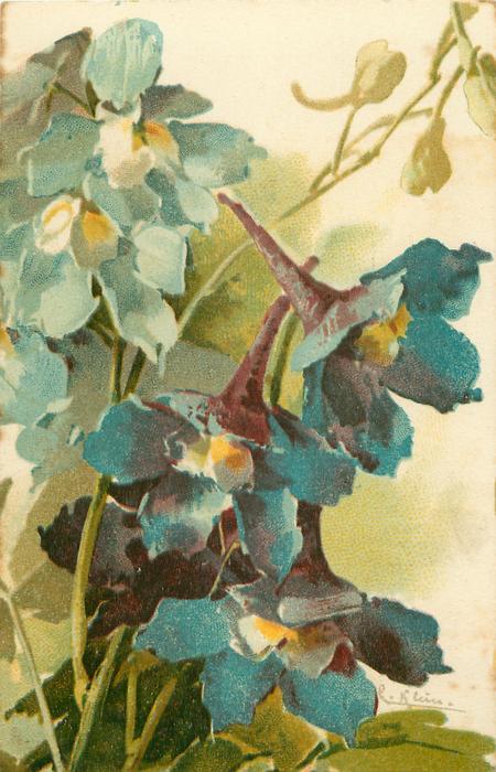 PIEDS D'ALOUETTE  blue