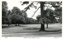 WALNUT TREE GARDENS