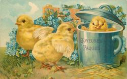 three chicks, one in blue mug, blue forget-me-nots around