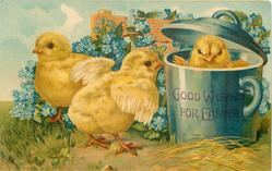 GOOD WISHES FOR EASTER  three chicks, one in blue pot, forget-me-nots