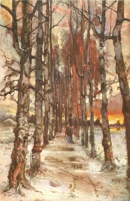 path between two lines of silver birch trees, snowy winter scene