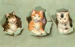 three kittens in holes through grey green background, left kitten is white fronted tabby, middle one is ginger/white, right kitten is white with black patches