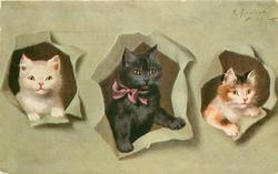 three kittens appear in holes through grey/green background, left kitten is white, middle one is black, right kitten is white/ginger/black