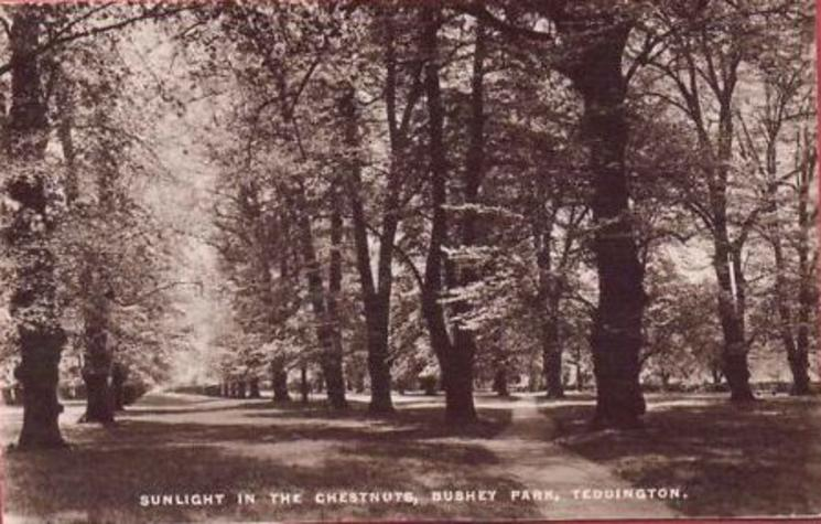 SUNLIGHT IN THE CHESTNUTS, BUSHEY PARK