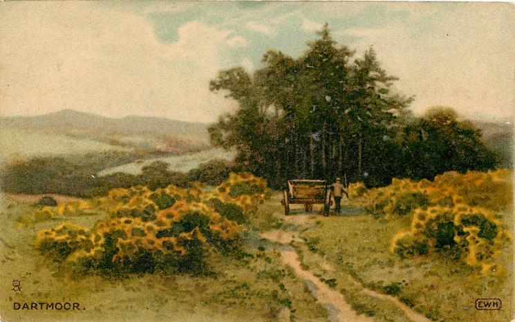 DARTMOOR  cart goes away down track between yellow flowered gorse bushes