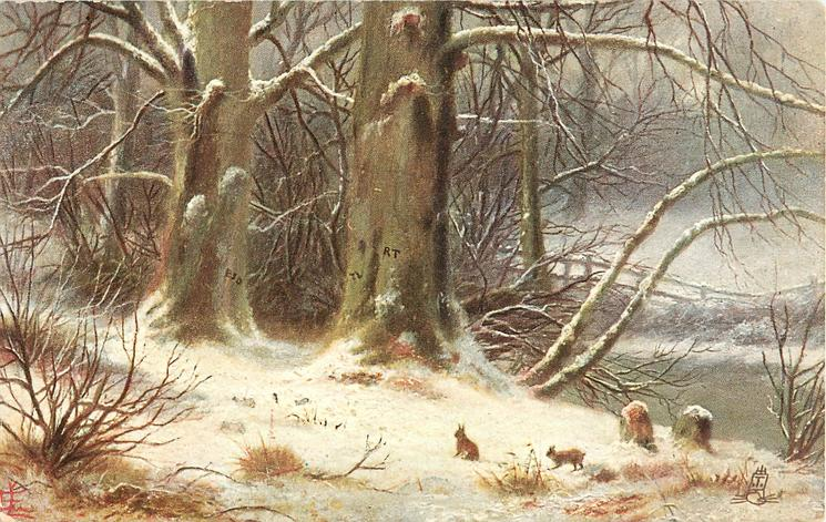 two rabbits in snowy wood scene, two stumps on lower right
