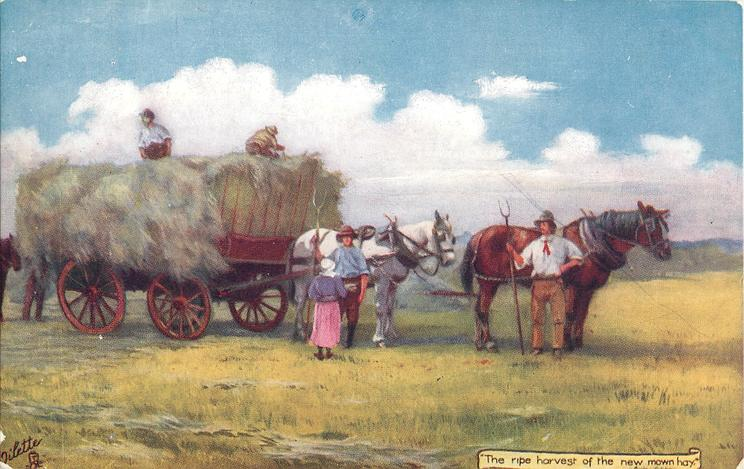 THE RIPE HARVEST OF THE NEW MOWN HAY