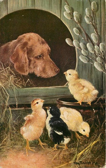 dog in kennel, four chicks outside