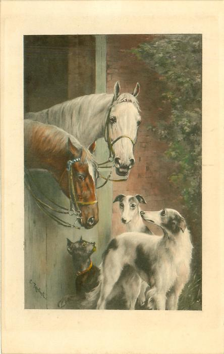 two horses look over stable door down at three dogs
