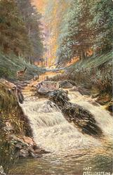 """HARZ FORELLENSPRUNG, back THE NAME FORELLENSPRUNG"""" MEANS """"TROUT STREAM"""" AND THIS BROOK IS ONE OF THE MOST FAMOUS PLACES FOR TROUT IN THE """"RADAU"""" VALLEY."""