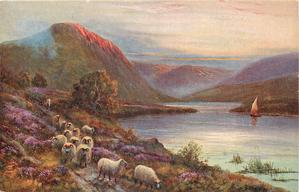 fifteen sheep on path, water to right, man behind sheep