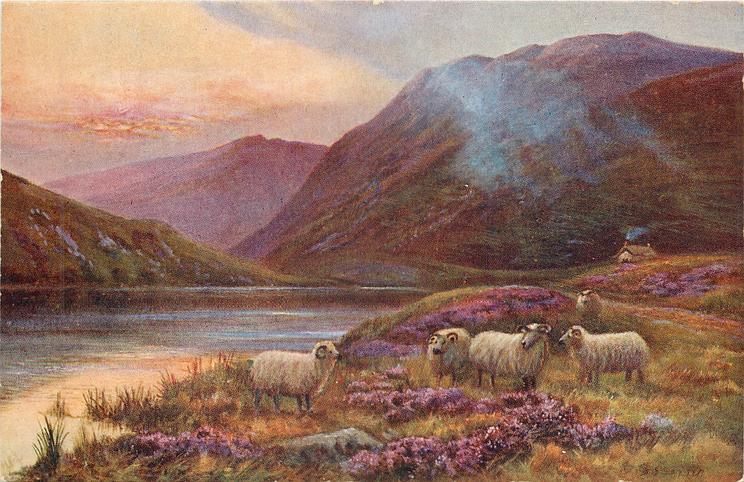 five sheep,cottage below hills behind, water to left