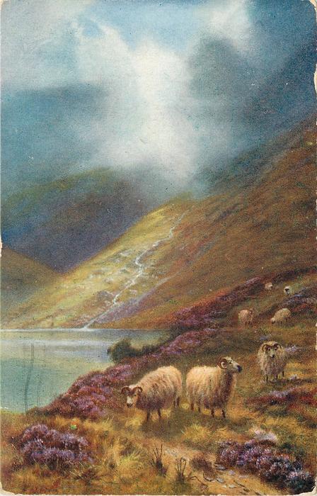 three sheep close, four sheep behind, water left