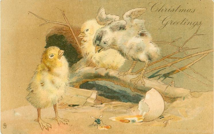 CHRISTMAS GREETINGS  two chicks perched on branch, another front left, broken egg front right, fly centre front