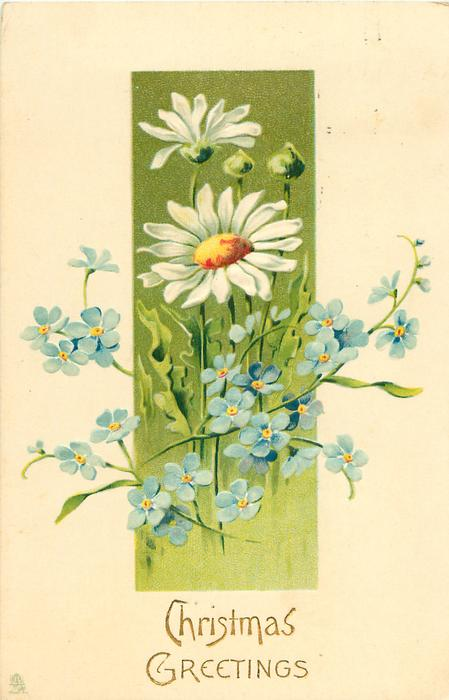 daisies & forget-me-nots