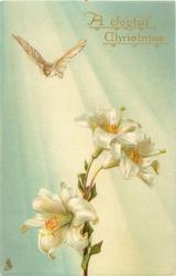 dove over Easter lilies