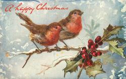 two robins on branch, holly right