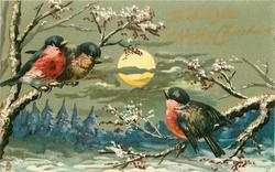 TO WISH YOU A HAPPY CHRISTMAS  three finches in snow scene, full moon
