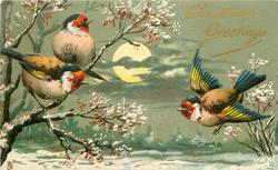 CHRISTMAS GREETINGS  three goldfinches in snow scene, full moon