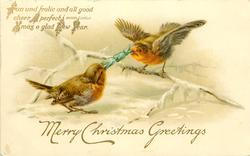 MERRY CHRISTMAS GREETING two robins pull cracker